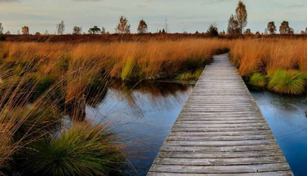 Valuing Wetlands: An Untapped Resource for Achieving a 1.5 Degree Future