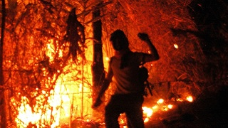 The Cost of Fire : An Economic Analysis of Indonesia's 2015 Fire Crisis