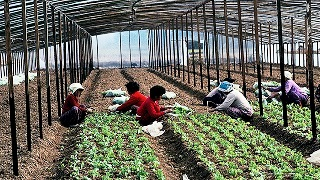 The Green Growth Movement in the Republic of Korea : Option or Necessity?