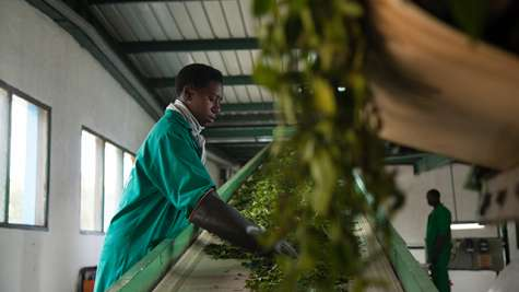 Maximizing Finance for Development (MFD) in the Agriculture and Food Sector  – 3. FCI Agribusiness Deep Dives and Country Private Sector Diagnostics (CPSD)