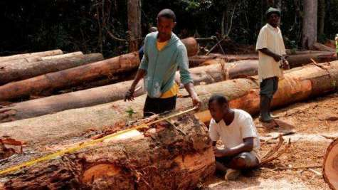 Forest Governance Assessment and Monitoring (Facilitated)