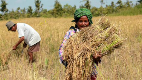 Gender in Climate-Smart Agriculture Projects (Self-paced)