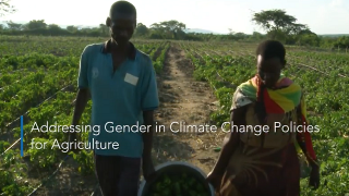 Addressing gender in climate change policies for agriculture