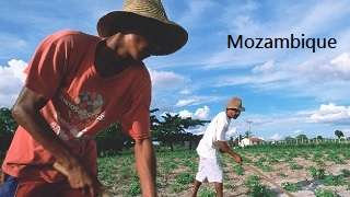 Mozambique - Agricultural Sector Risk Assessment