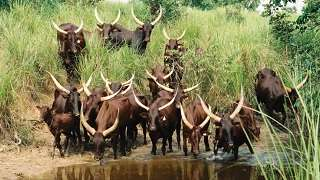 Potential Impact of Climate Change on Resilience and Livelihoods in Mixed Crop-Livestock Systems