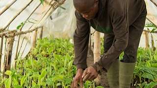 Spotlight: Collaboration Brings 'Amazing' Achievements in West African Agriculture