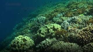 Return of Coral Reefs Brings Good Fortunes to Coastal Communities in Indonesia