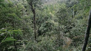 An introduction to the What, Why and How of forest governance assessment (Podcast)
