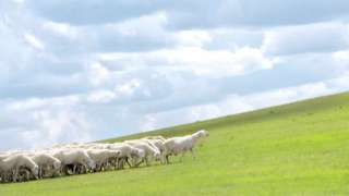 Introduction To The Investing In Sustainable Livestock Guide & Tool