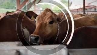 Happy Cows Help Save the Planet: Climate-Smart Agriculture in Costa Rica