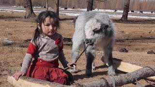 A New Model to Insure Livestock in Mongolia