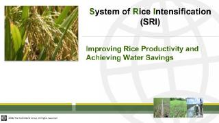 (Part A) Producing More Crops per Drop: An Innovative Way of Rice Cultivation