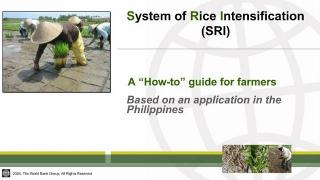(Part B) Producing More Crops per Drop: An Innovative Way of Rice Cultivation