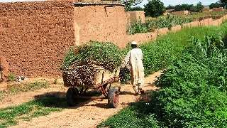 Community-Based Disaster Risk Reduction in Niger
