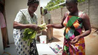 Sustainable Energy African Women Turn Manure Into Opportunity