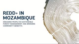 REDD+ Mozambique: Empowering Rural Communities Towards Sustainable Forest Management