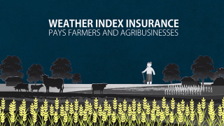 Weather Index Insurance in Bangladesh