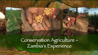 Conservation Agriculture: Zambia's Experience